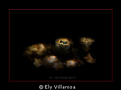 Flounder's eye. I took this photo with a CanonG11. I used... by Ely Villarosa