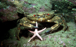 Velvet swimming crab and lunch.  Taken in or around 1989... by Arun Madisetti