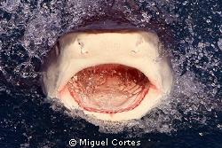 Say..... aaaaaaaaaaa. by Miguel Cortes