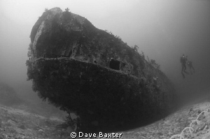 carpet cove Fiji by Dave Baxter