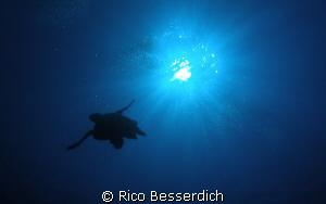 Turtle against the sun. Olympus CW 7070 by Rico Besserdich
