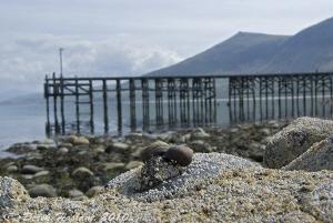 Trefor pier. S5PRO, 18-200mm. by Derek Haslam