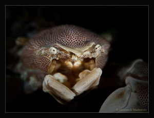 """""""Out of the darkness"""" Anemone crab by Aleksandr Marinicev"""
