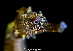 Sea horse by Jagwang Koo