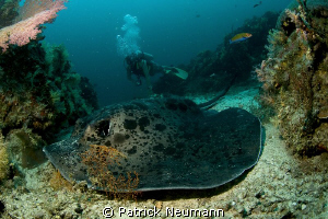 Similan Islands by Patrick Neumann