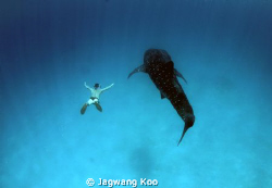 Whale Shark and Skin Diver by Jagwang Koo