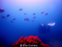 """To boldly go where no man has gone before!"" by Elia Correia"