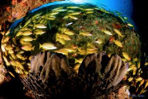 Fish Bowl :) by Allen Walker