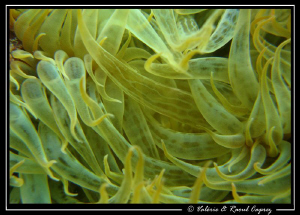 Like an abstraction 