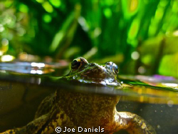 Getting creative in the pond by Joe Daniels