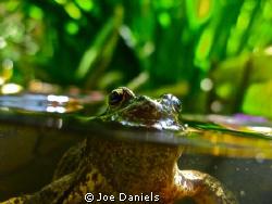 Getting creative in the pond by Joe Daniels