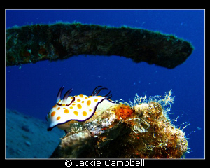 Pretty much my only nudi photo !! Taken with my first ca... by Jackie Campbell