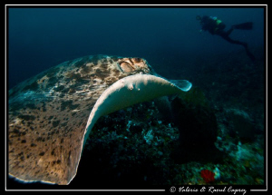35 meters depth, a bad visibility and a strong current ..... by Raoul Caprez