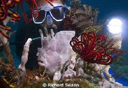 Painted Frogfish Richard's Reef, TARP, Kota Kinabalu, Nik... by Richard Swann