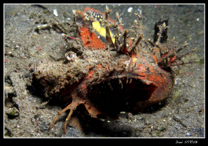 Devil scorpion fish ind Dauin :-D by Daniel Strub