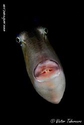 Trigger fish by Victor Tabernero