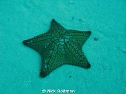 The superstar!  Picture taken besides C-53 wreck, Cozumel. by Nick Roitman