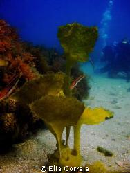 Beautiful Kelp! by Elia Correia