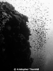 So many fish in Ko Tao! by Kristopher Thornhill