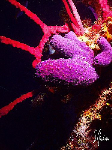 This image was taken during a dive in 2007 off Roatan. Th... by Steven Anderson