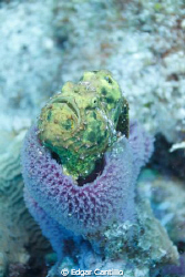 THis is my first Frog fish and I was not expecting it in ... by Edgar Cantillo