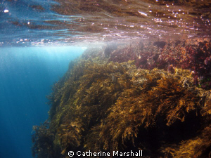 Poor Knights Islands, New Zealand. Taken while snorkellin... by Catherine Marshall