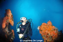 Wide angle diver shot by Louwrens De Lange