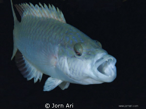 Fish in the black abyss.  More Photos: www.jornari.com by Jorn Ari