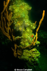 This coral head was near the wheel house of the RMS Rhone... by Bruce Campbell