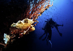 My 3 buddies missed this highlight of our dive, busy with... by Bernard Maglana