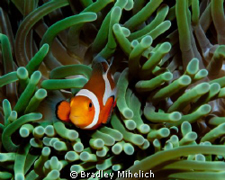I made a whole group of japanese divers wait so I could g... by Bradley Mihelich