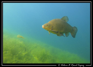 Better in the lake than in the plate ! :-) by Raoul Caprez