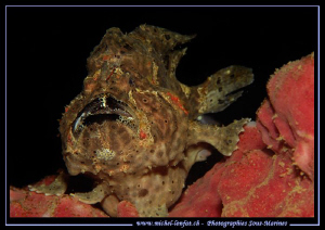 Master Frog Fish posing.... Nice Lipstick... :O)... Que d... by Michel Lonfat