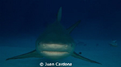 face to face / diving at the wreck dive in cancun in canc... by Juan Cardona