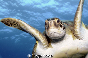 Hiya! I was just swimming around and saw your camera... by Jorge Sorial