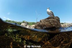 Sea gull... by Alp Baranok