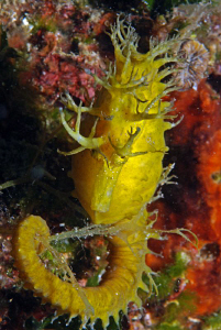 another seahorse by Andy Kutsch