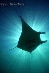 Manta Sunburst, taken free diving at 10mm focal length by Paul Markey