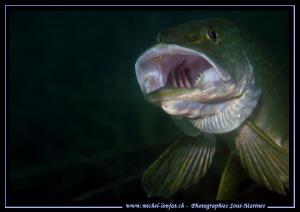 King Pike Fish digesting time... Que du bonheur... :O)... by Michel Lonfat