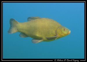 Like a stuffed fish hung on the wall of an old fisherman :-) by Raoul Caprez