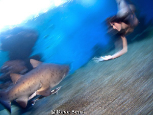 Underwater Modelshooting with Sandtigersharks in spain.