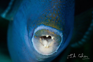 Trigger Fish - A Little Too Close! by Julian Cohen