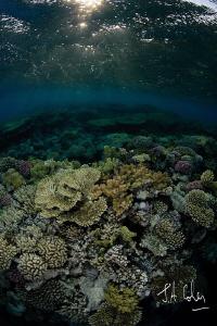 Reef Scene by Julian Cohen