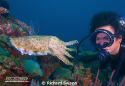 Friendly Cuttlefish, Nikon D2x 12-24 lens manual exposure... by Richard Swann