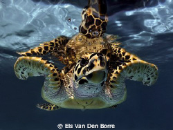 The most friendly turttle i've ever seen by Els Van Den Borre