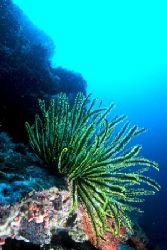 """""""Reef Scene"""" Sipidan, Malaysia by Brian Welman"""