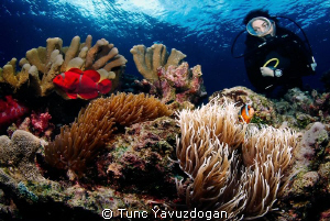 A reef scene :) by Tunc Yavuzdogan