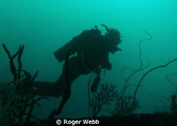 "Deep dive on ""Bianca C""  Grenada, WI by Roger Webb"