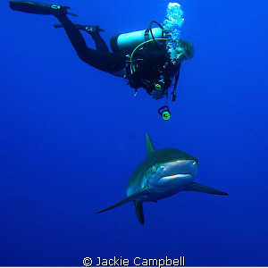 Silky shark with diver. This is this divers current scre... by Jackie Campbell