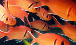 Red sad fish :( by Durand Gerald